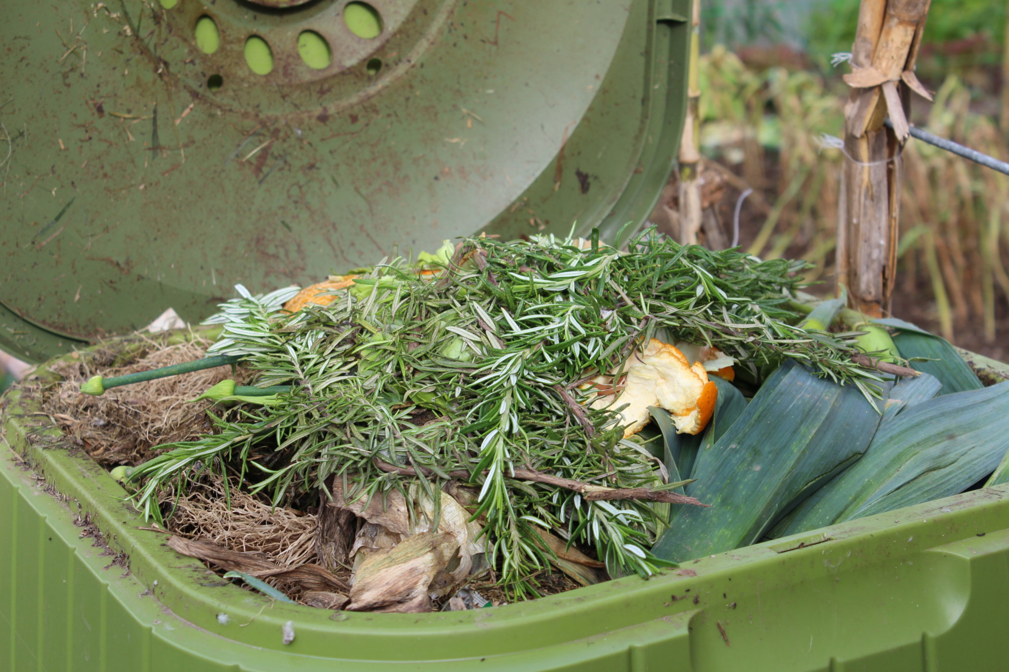 O composto produzido com os restos de cada parcela constitui um fertilizante natural.