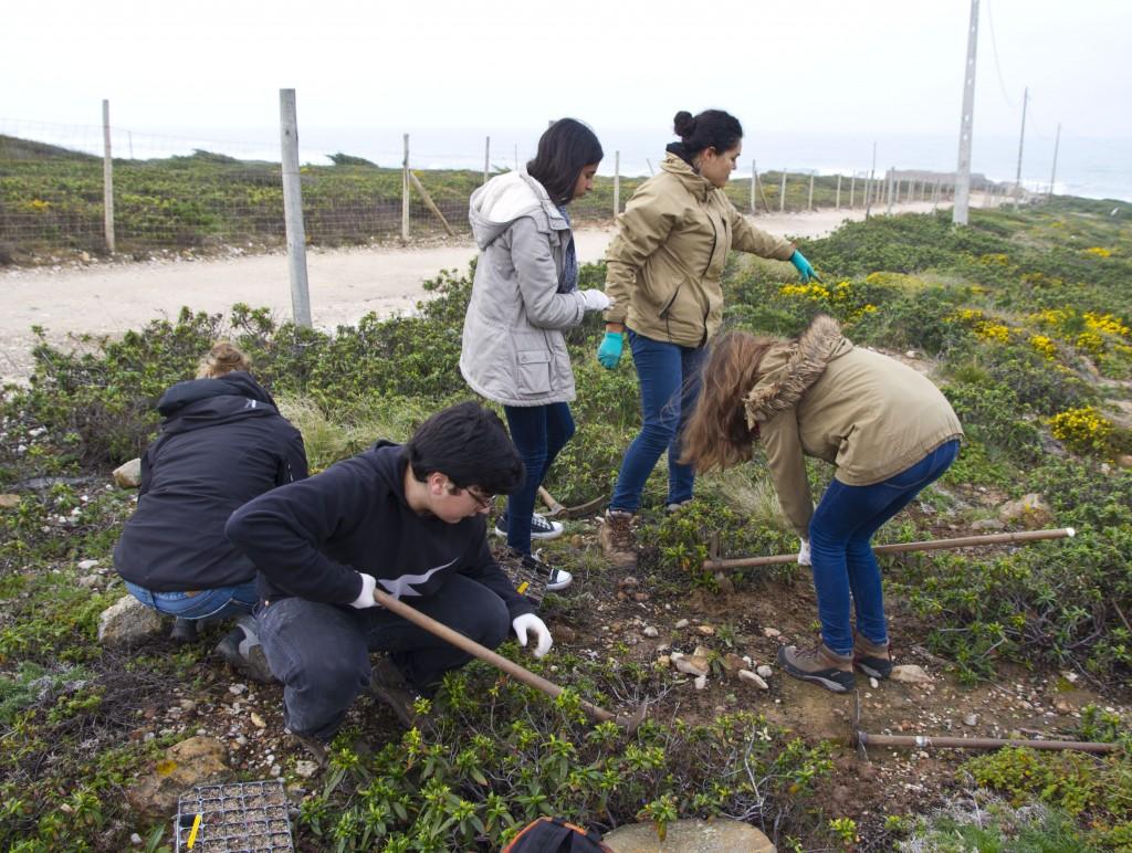 da Cascais Ambiente numa ação de plantação de plantas juvenis #4F5C34 1024x772