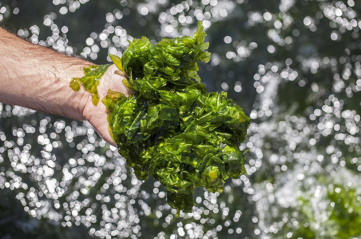 Algaplus – Aquacultura sustentável