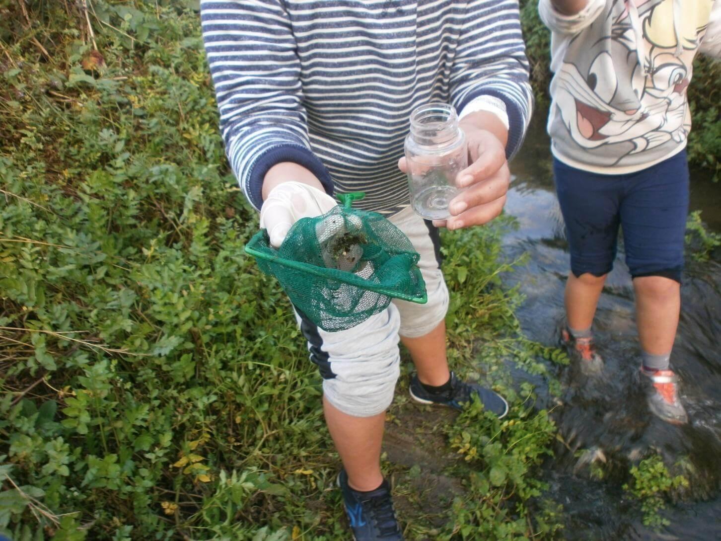 Foto 6 – Quisemos ver mais invertebrados e utilizamos redes de insectos para encontrar possíveis macroinvertebrados.