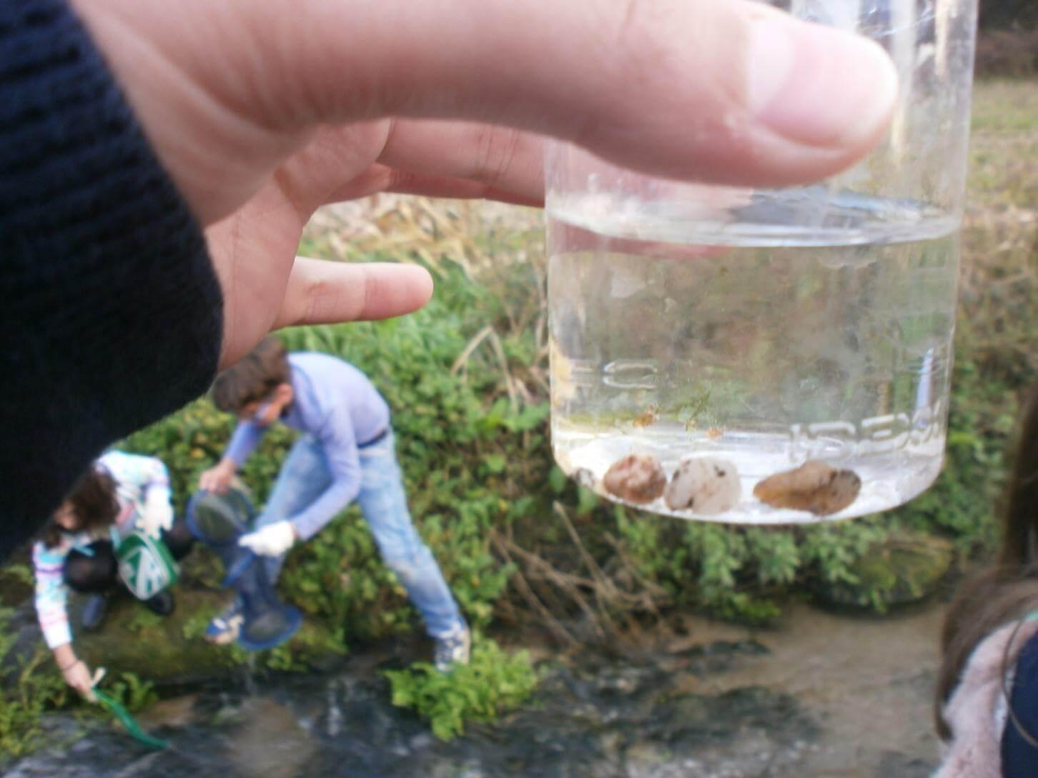 Foto 7 – Encontramos macroinvertebrados como minhocas de água e caracóis.