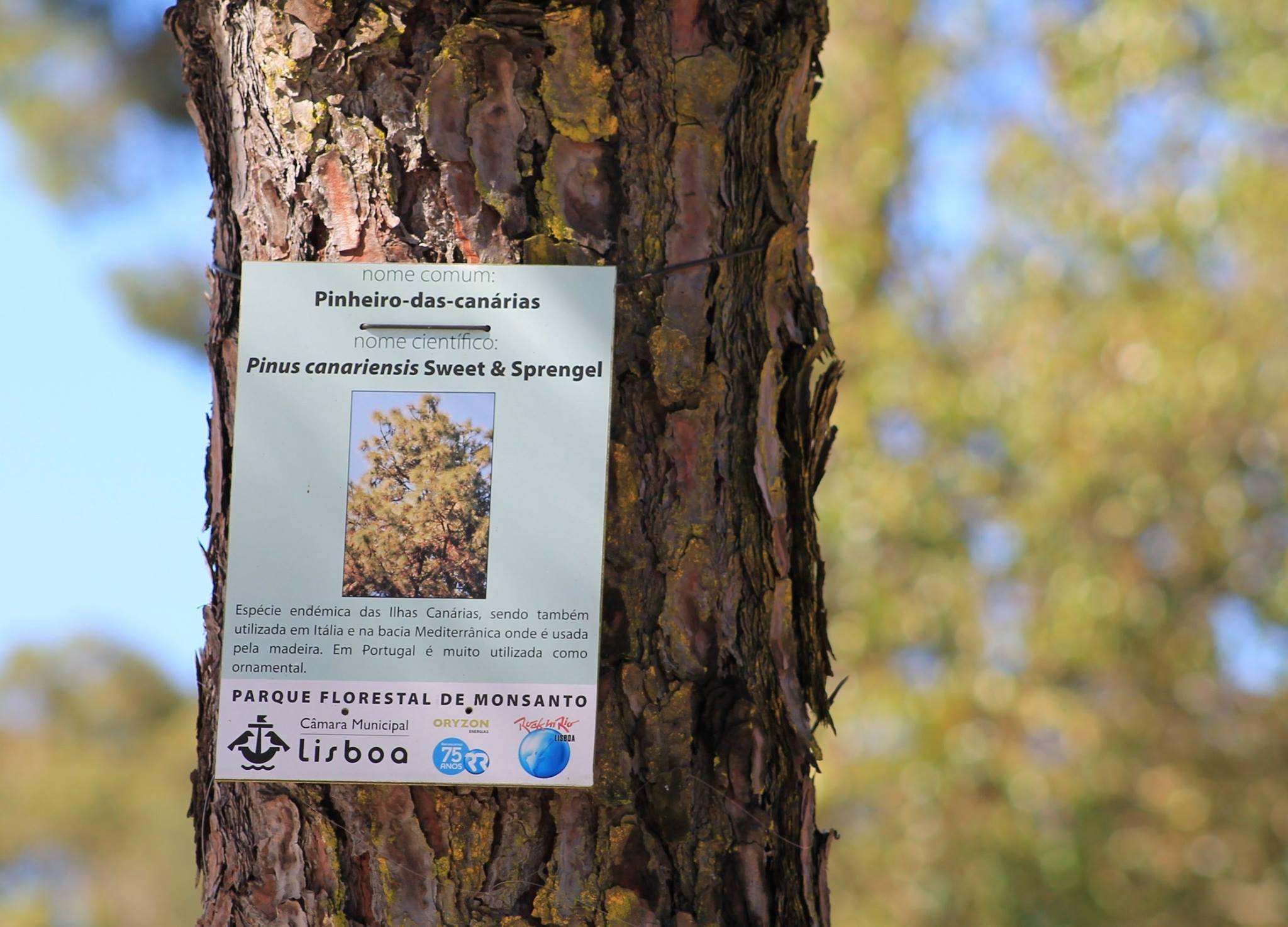 Aprender com o Parque Florestal de Monsanto e com os seus espécimes.