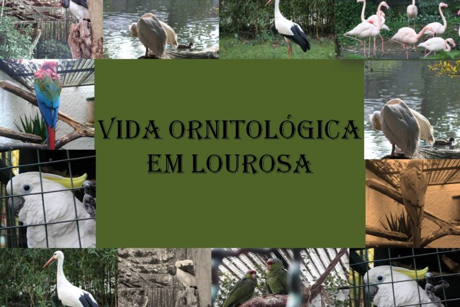 Vida Ornitológica em Lourosa