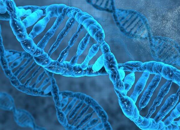 Perda de diversidade genética