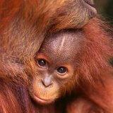 Óleo de palma-desflorestação por produtos do quotidiano