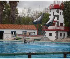 Delfinário: individualidade em primeiro lugar
