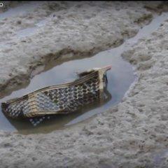 O Lixo marinho e o rio Tejo