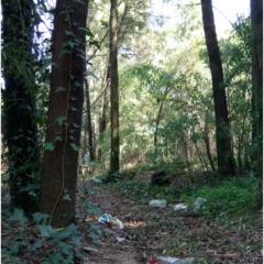 Pelos Caminhos da Floresta, pelos caminhos do Lixo!