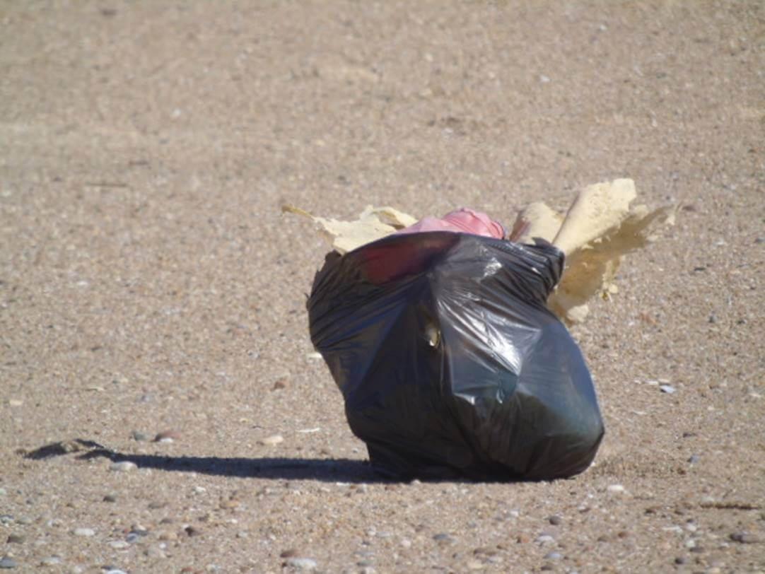 Resultado de imagem para Vai à praia este domingo? Recolha o lixo e plásticos da areia e do mar