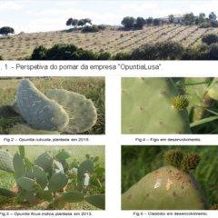 A Figueira-da-índia em Portugal: Influência nos Ecossistemas