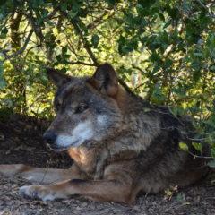 JRA no Centro de Recuperação  do Lobo Ibérico