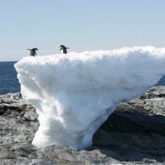 Alterações Climáticas: agir para mudar