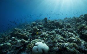Recifes de coral poderão desaparecer até 2050