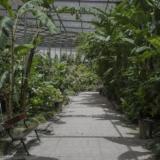 Estufa Fria: Uma pedreira rica em biodiversidade