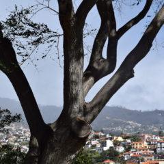 O vento não dá tréguas à ilha da Madeira