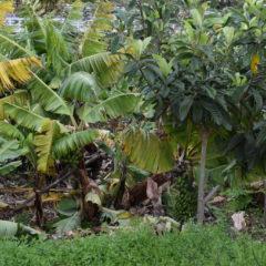Baixa temperatura e ventos fortes na Madeira afetam produção agrícola