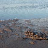 A impressão digital da poluição no rio Trancão