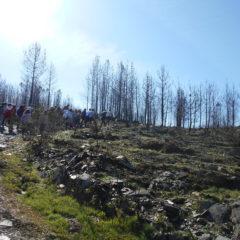Plantação de árvores em área ardida
