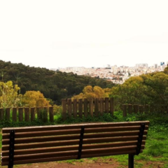 Monsanto Forest Park – Where Nature Meets the City