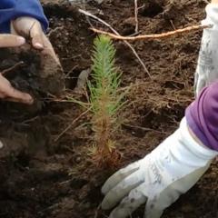Programa 25.000 árvores até 2025 pela nossa Floresta Autoctóne