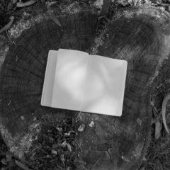 Devemos usar menos papel ou derrubar mais árvores?