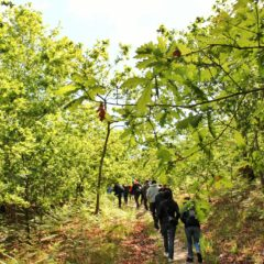 BioLousada vai à Mata de Vilar, um Oásis para a Biodiversidade