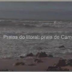 A biodiversidade na Praia de Cambelas