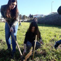 Plantação em Esmeriz