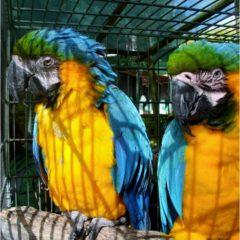 O Bosque Encantado das Aves