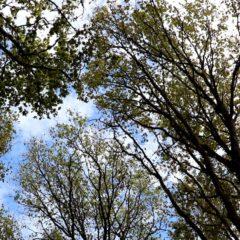 Floresta, Economia e Vida