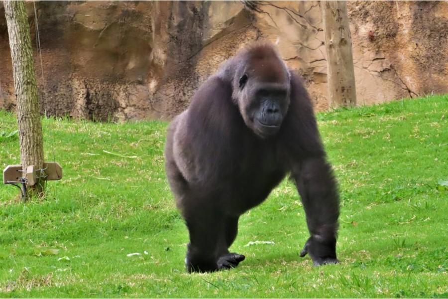 Primata: o animal mais parecido com o ser humano
