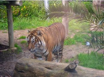A missão do Zoo na conservação de espécies