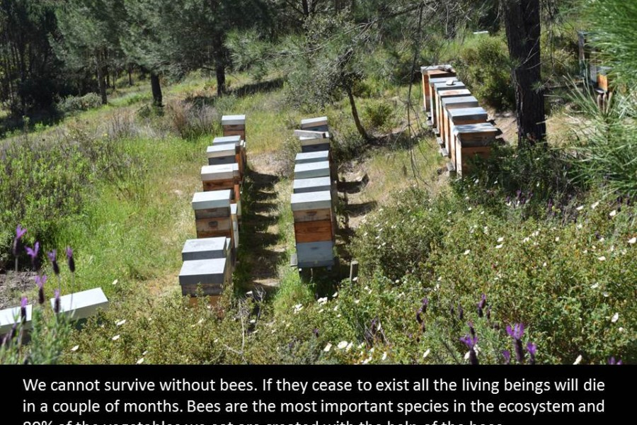 The importance of the bees