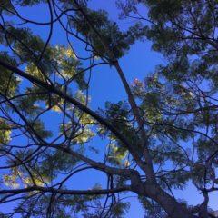 Árvores: as bombas de oxigénio