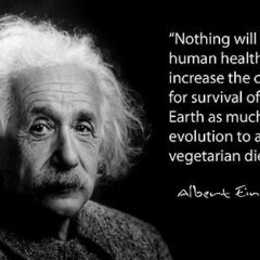 Vegetarianism – A lifestyle that can help our future