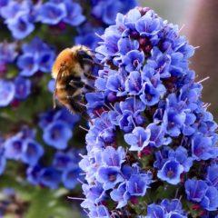 As obreiras da Vida – abelha – Apis mellífera