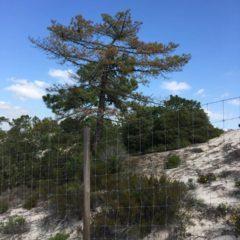 Nemátode da Madeira do Pinheiro: uma grave ameaça à nossa floresta