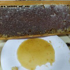 """""""As abelhas salvam o Planeta"""""""