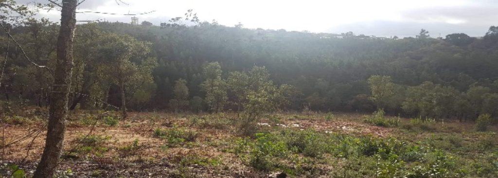 Zona desflorestada no Algarão.