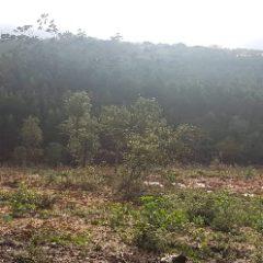 Zona desflorestada no Algarão
