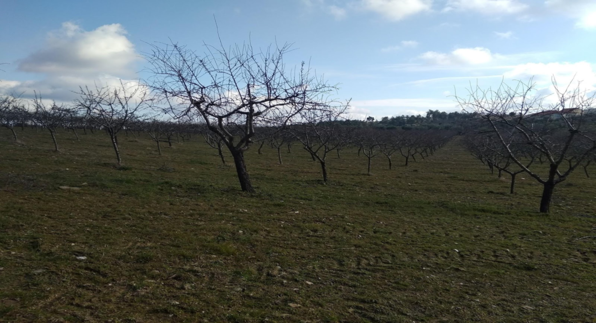 Efeito das alterações climáticas na produção agrícola no Alto Douro