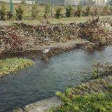 Garças e lontras voltam a ser avistadas no rio Este