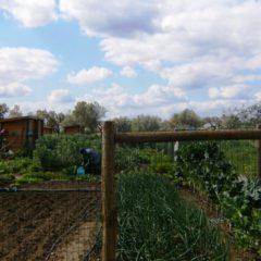 A horta Comunitária em Vila Nova da Baronia