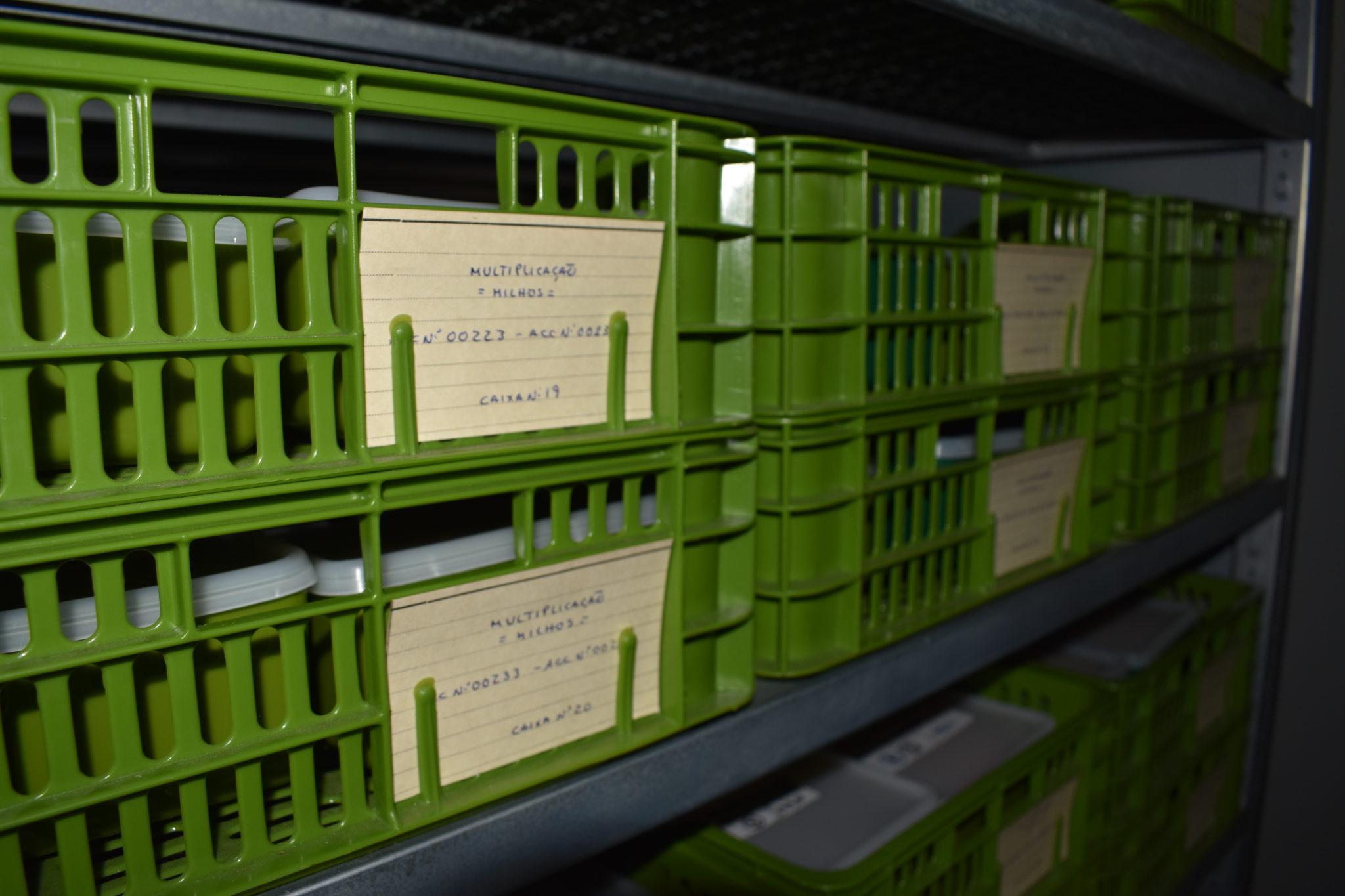 Armazéns a frio onde são preservadas as sementes