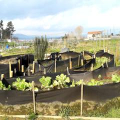 Hortas Comunitárias melhoram a  qualidade de vida