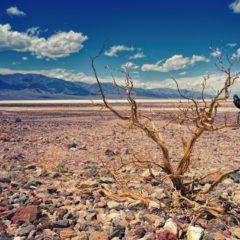 Sobrepopulação mundial e as suas consequências ambientais