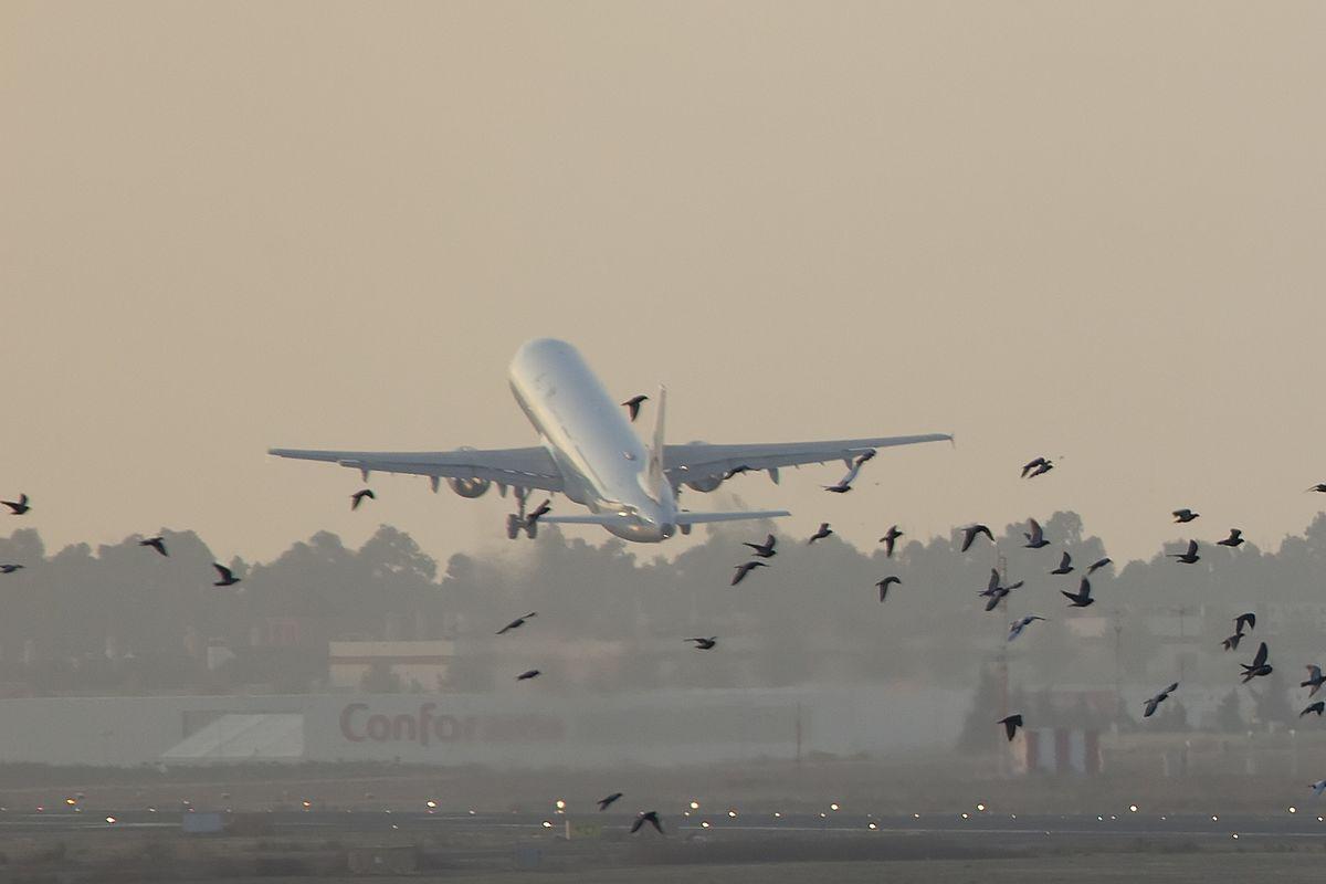 """Aeroporto do Montijo: uma solução """"mascarada"""""""