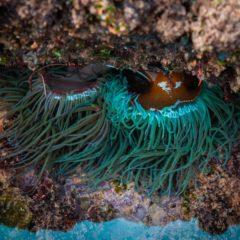 Biodiversidade na praia das Avencas