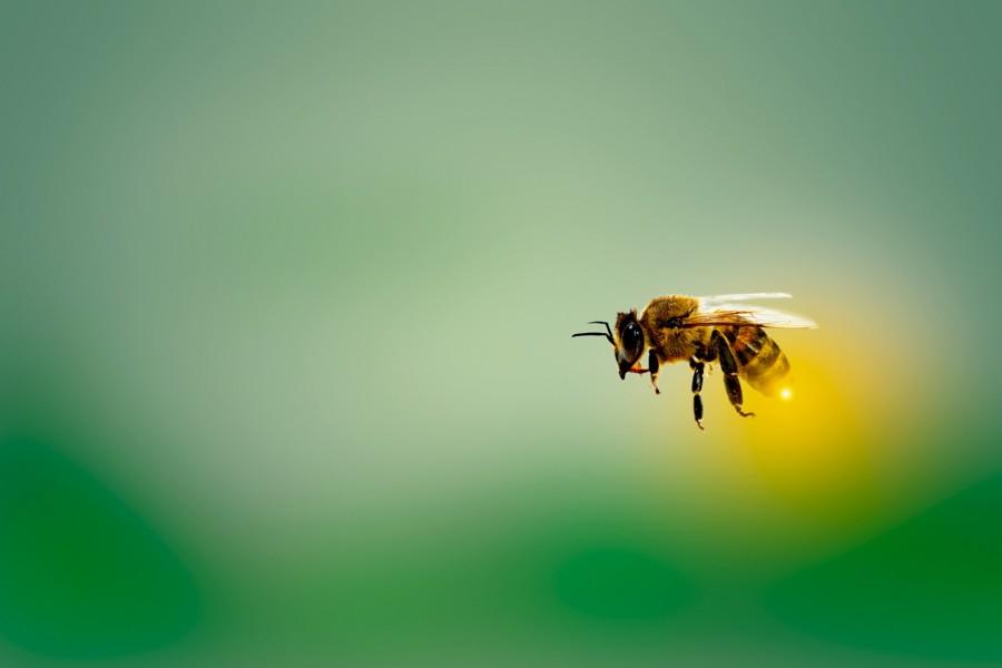 """""""E se …"""" não existissem abelhas?"""