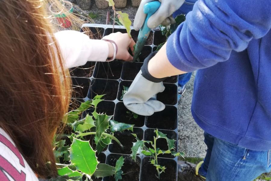 Plantas Autóctones – Experiência na Horta